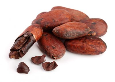 Gallery Cacao fruits